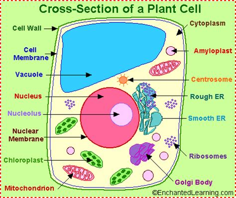 Plant cell research paper